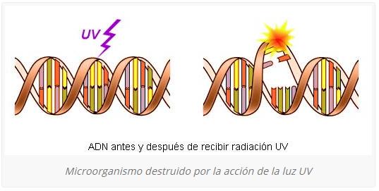 ADN antes y después de recibir radiación UV